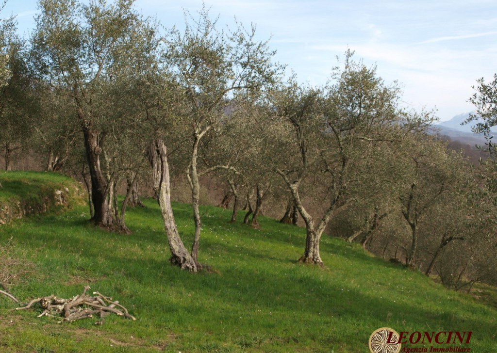 Sale Cottages and Stonehouses Pontremoli - P116 farm with olive grove Locality